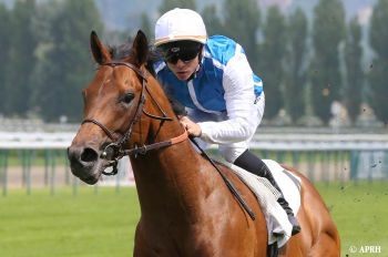 First mares in foal for Attendu