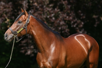 Another first crop winner for Anodin