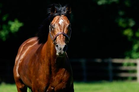 Concours photo : les premiers foals de Recoletos