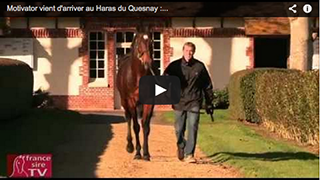 Motivator just arrived at Haras du Quesnay: itw Vincent Rimaud